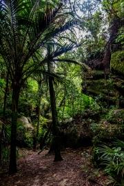 Grove Scenic Reserve