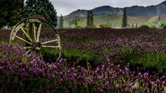 Lavendel Farm