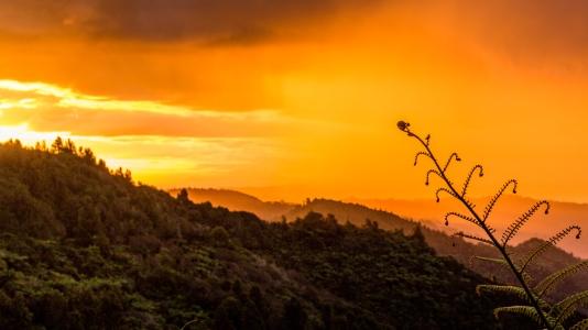Whanganui National Park