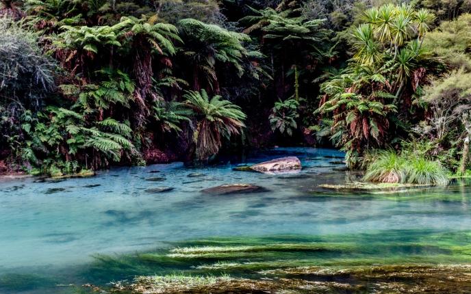 Te Waihou Waters