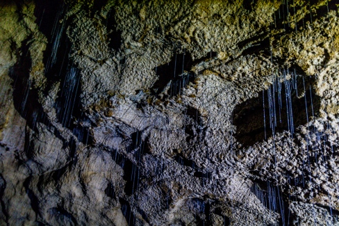 Waitomo Caves