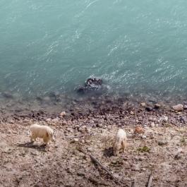 Rocky Mountain Goats-1