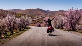 Almondtrees